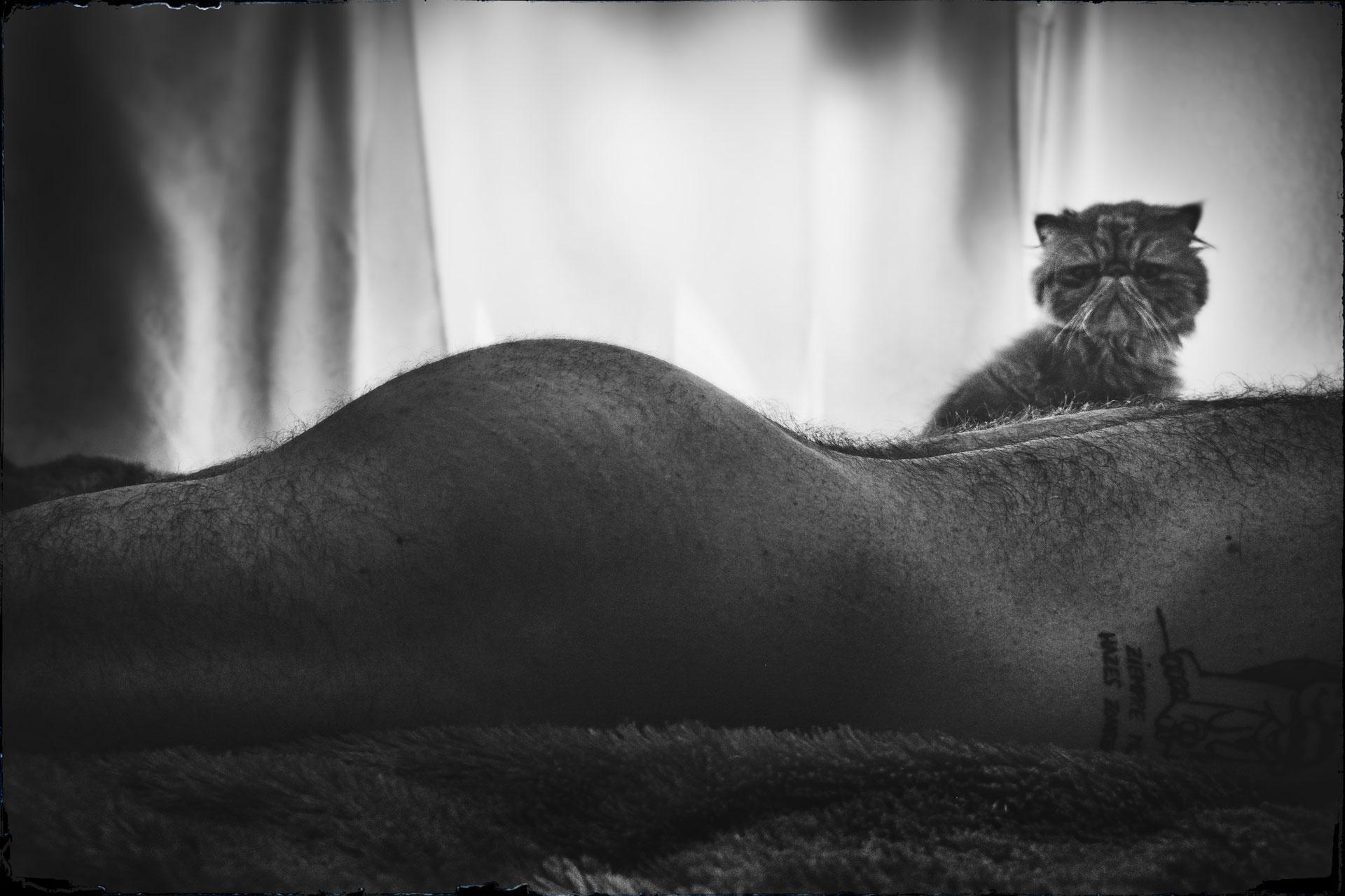 hombre desnudo y gato persa